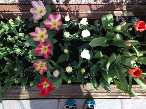 Tulip bed and slippers!
